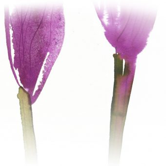 purple copy copy